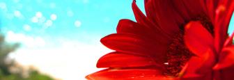 Lefkas natuur bloem en uitzicht op Egremni